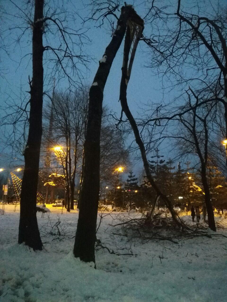 اختصاصی/برخی از درختان بوستان ملت رشت با خاک یکسان شدند